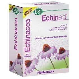 ECHINAID 60cps internet