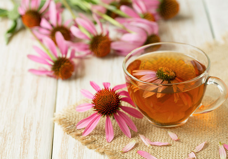 Echinacea: la risposta naturale a raffreddore e influenza.