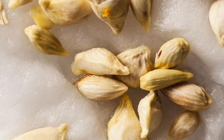 Le proprietà dei semi di pompelmo